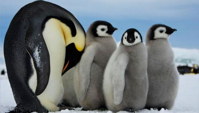 Antarktida Expedice Extrémní Ledovce Simply Tour Czech Sport Guru (6)